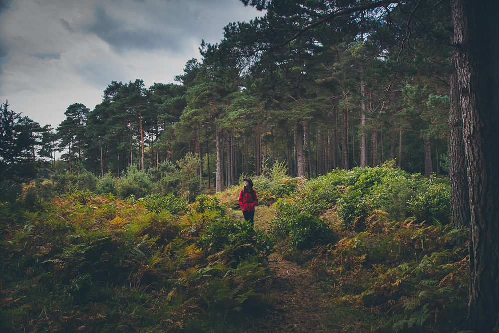 The New Forest National Park, England