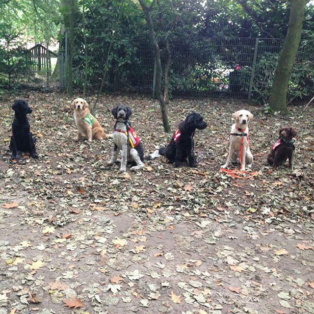 Assistenzhundspaziergang am Sonntag - Es hat echt Spaß gemacht so viele der Teams, die ich im Training habe und hatte auf einem Haufen zu sehen. Tolle Menschen mit tollen Hunden 💕 #dreamteam #assistenzhund #hundespaziergang #assistenzhundtraining #hundeinhamburg #doggycamp