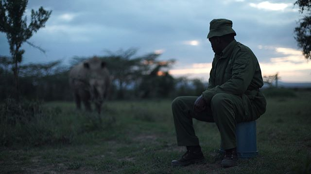 Big things coming up for Ragtag Tribe Films.  We've teamed up with @thatguyhambone to produce 'The Last Male Standing' - a story about Sudan (the last male northern white rhino in existence) & his caretakers. We've poured the last four years into telling this story & we're honored to be given the exclusive privilege from @olpejeta to share it with the world. Follow @thelastmalestanding and @ragtagtribe for the behind the scenes scoop during our upcoming production trip. | 'The Last Male Standing' • #documentaryfilmmaking #supportindiefim