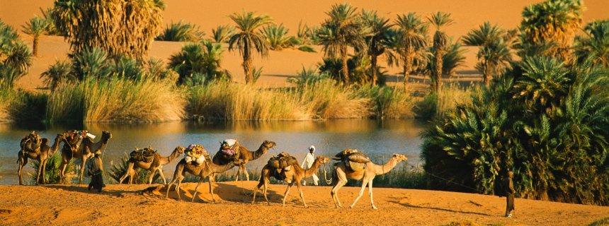 SaharaOasis.jpg
