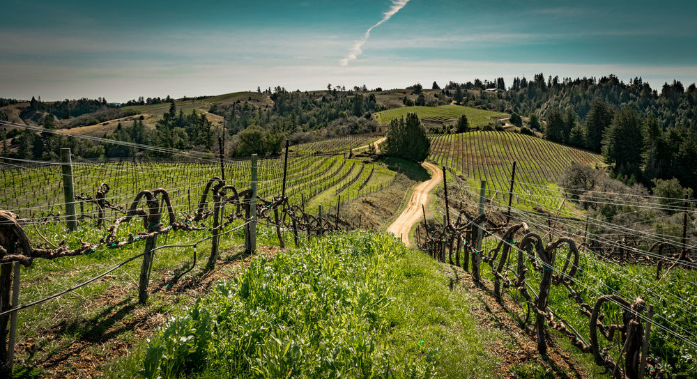 Hirsch Vineyards, Sonoma Coast : Photo by  Jeff Bramwell