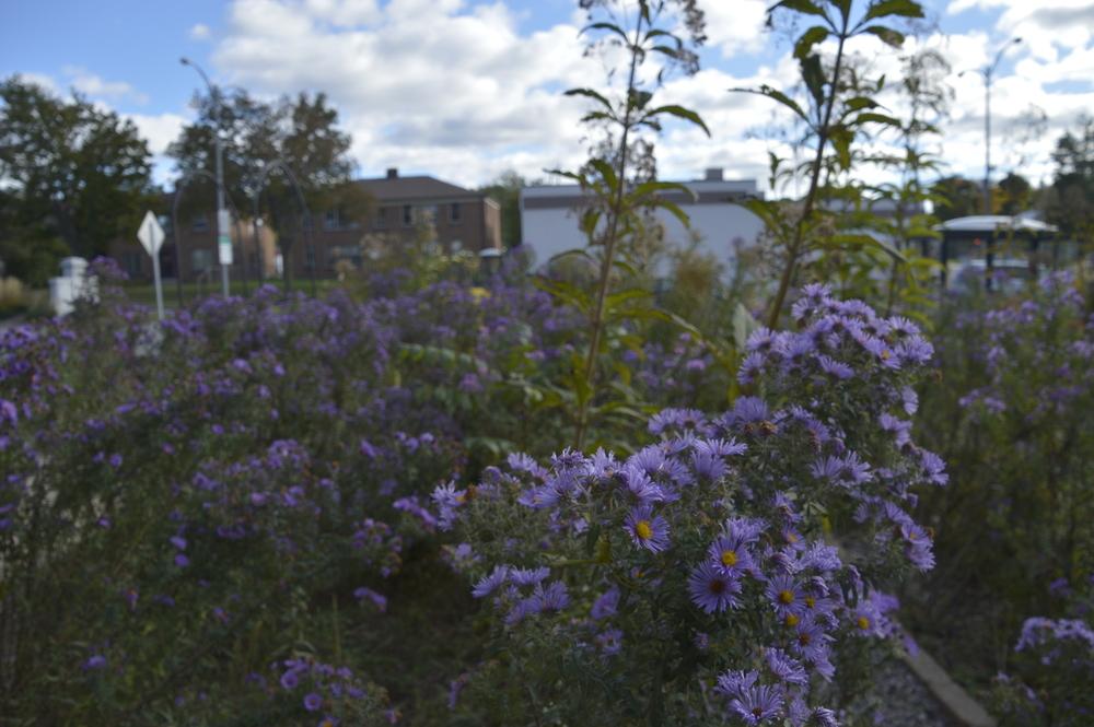 Hawley: Gardens