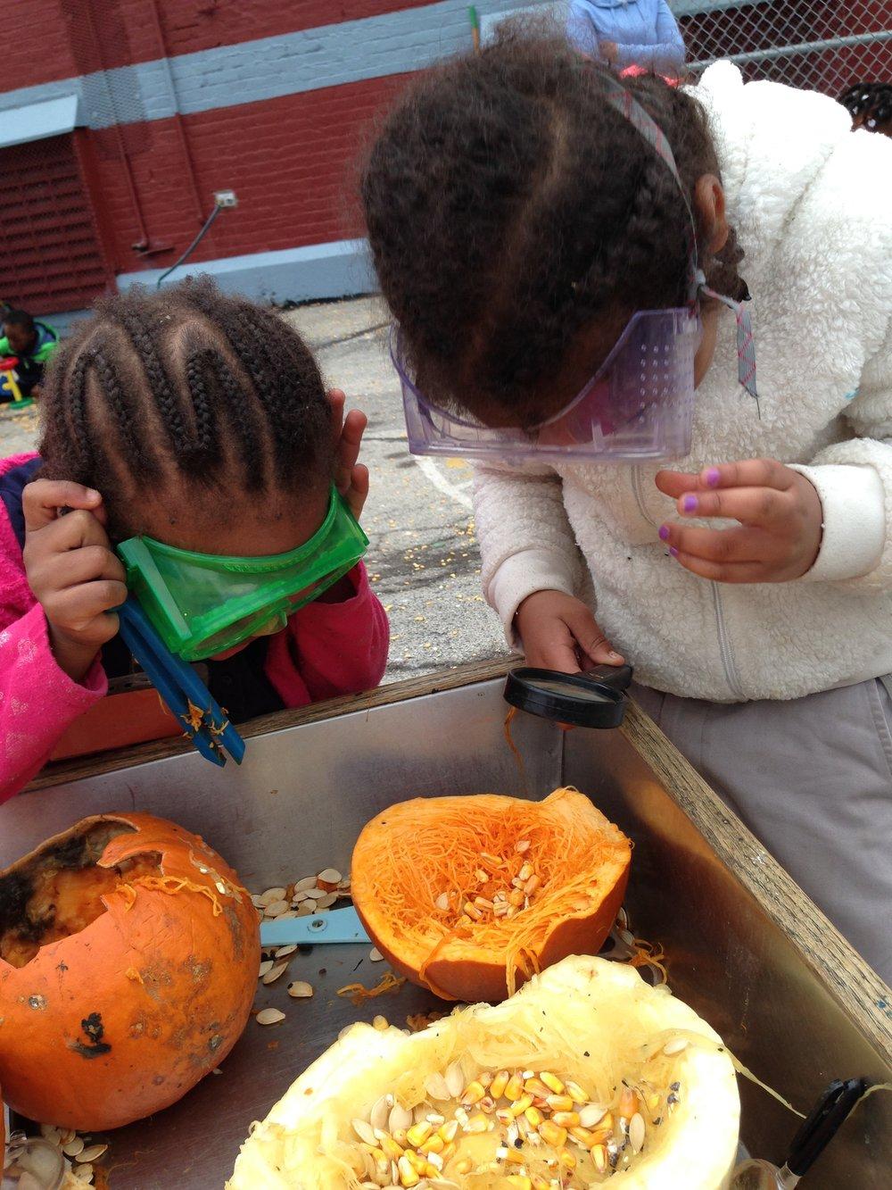 pumpkin exploration counting, fine motor, senses.JPG
