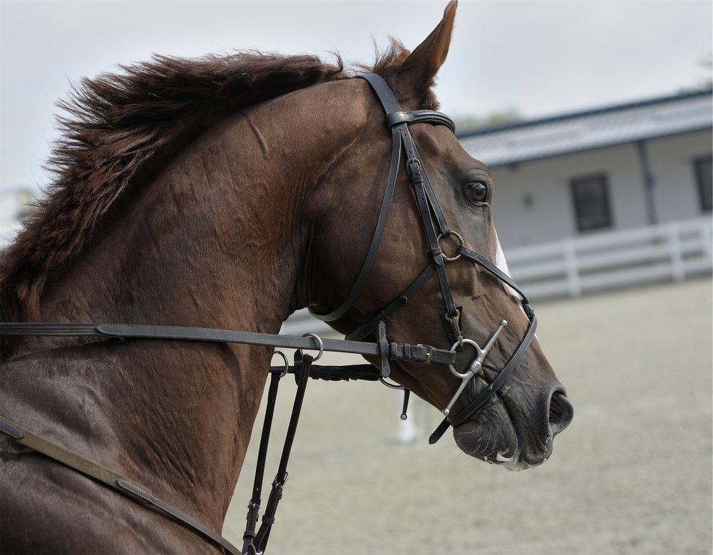 horse-691477_1920.jpg