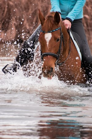 Sterling Essentials - Water Protection for Leather and Tack.jpg