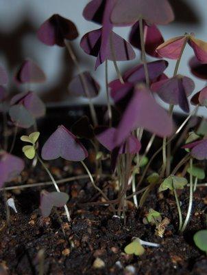 purple+plant
