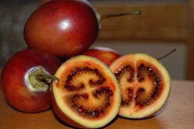 tree tomato for blog