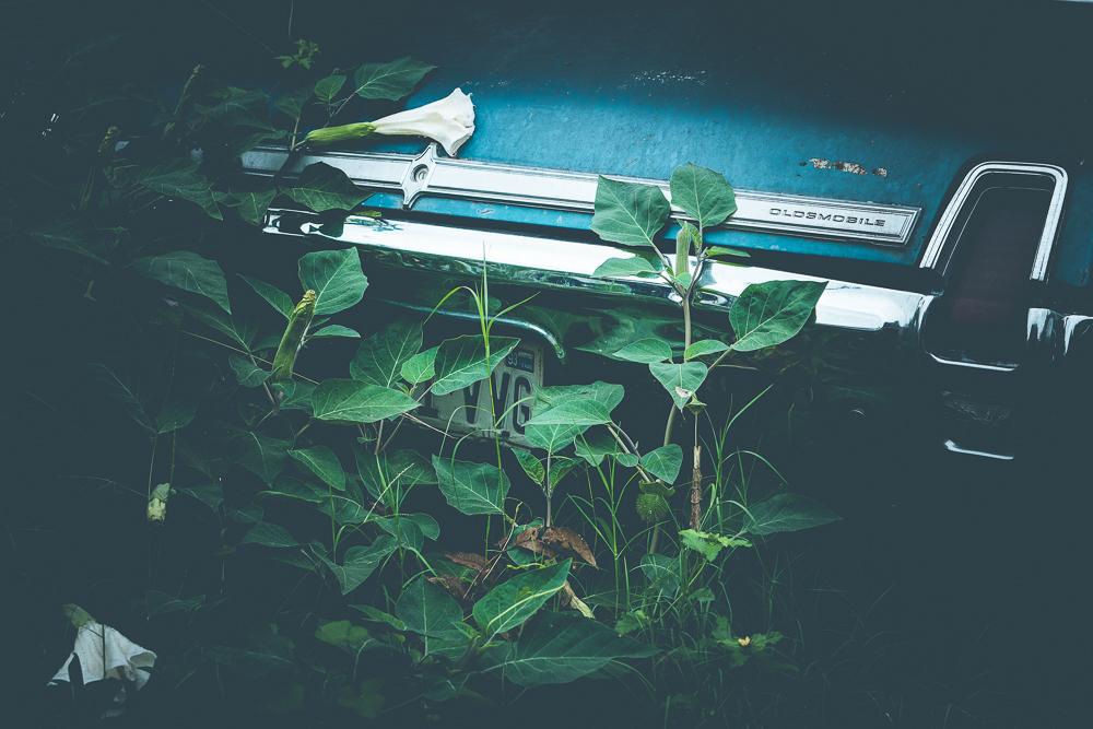 holly-postler-available-prints-00084.jpg