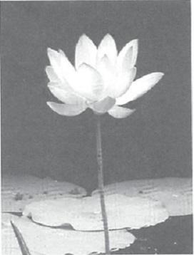 mb30-dharma2