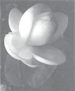 mb31-dharma18