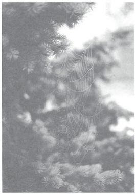 mb31-dharma2