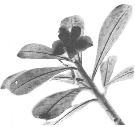 mb30-PoemByMargaret