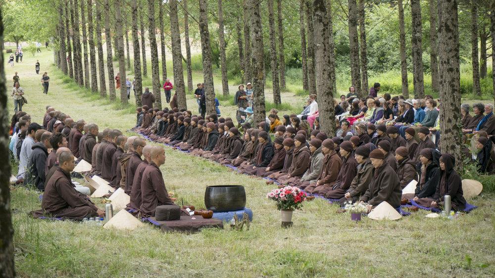 MB79-10 PV woods sitting monastics courtesy of monastic Sangha.jpg