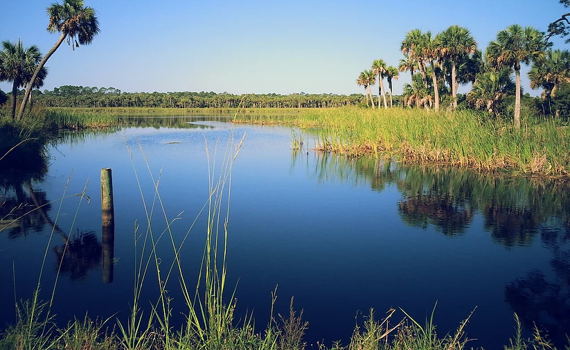 Alligators are in every freshwater lake in Florida
