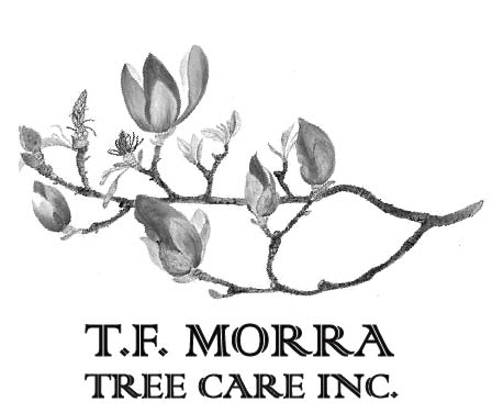 TF Morra Tree Care, Inc.