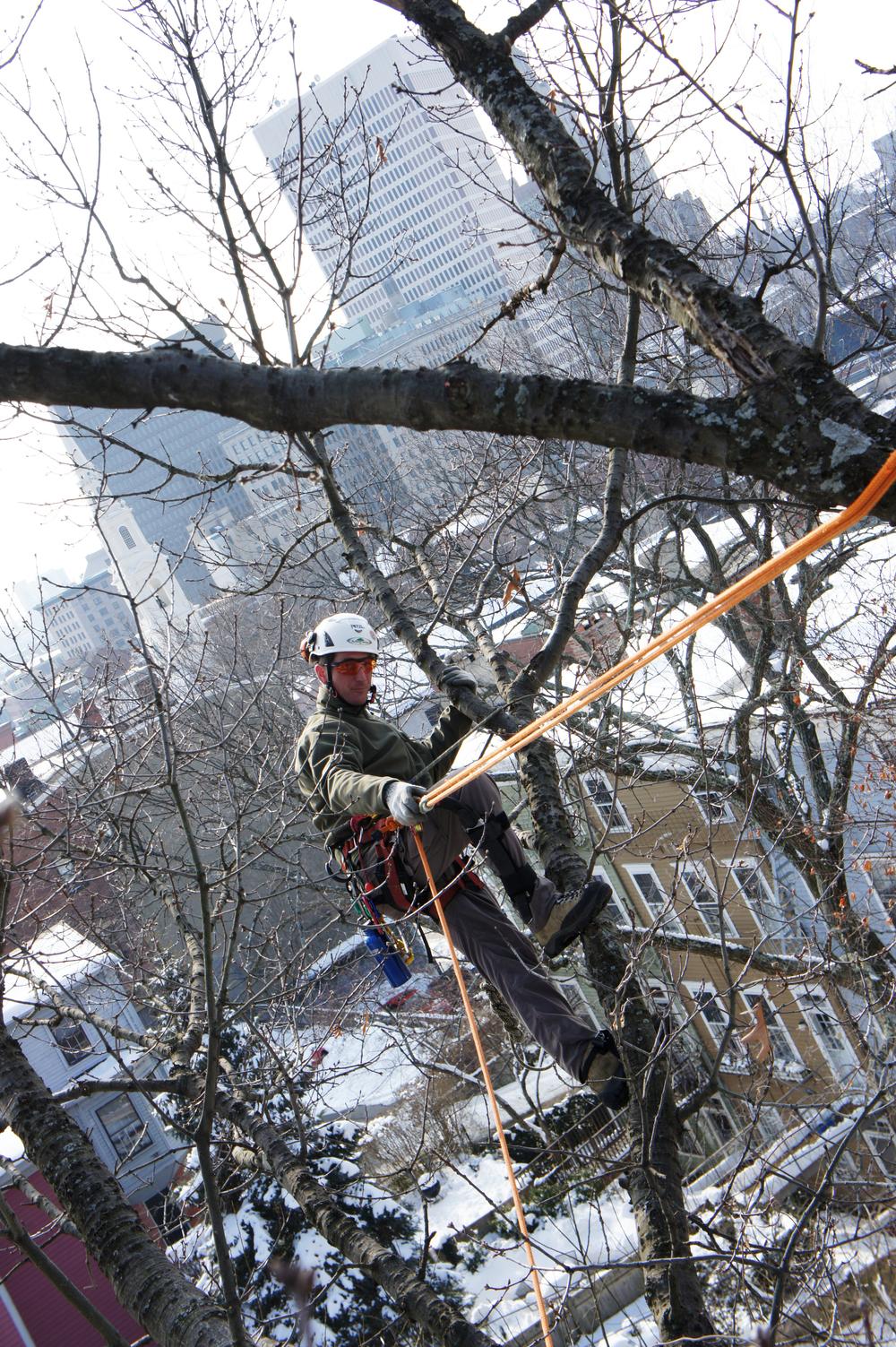 Arborist Safety.JPG