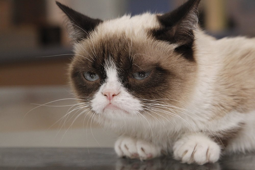 ct-grumpy-cat-lawsuit-20180124.jpg