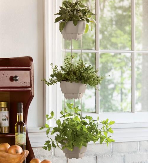 herbs in indoor hanging pots