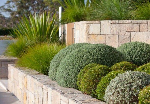 modern garden with sculptured plants