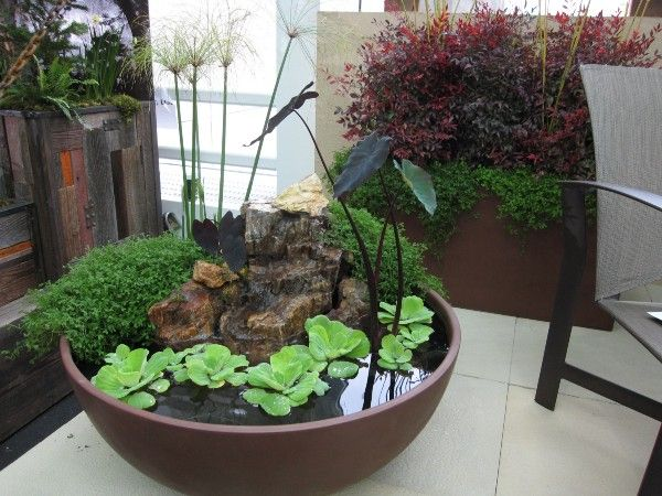 garden in a bowl feature