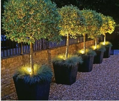 garden plants with accent lighting