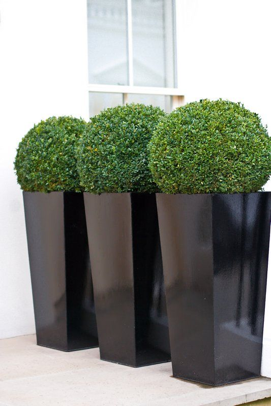 large gloosy black planters