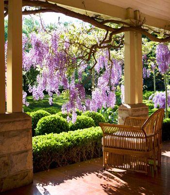 open verandah with wisteria screens