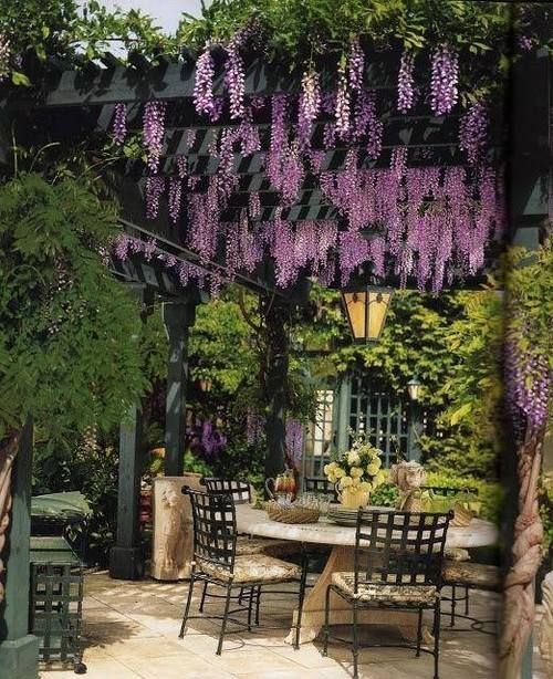 black pergola with wisteria creepers