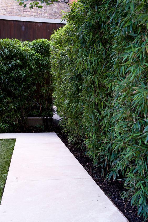 бамбуковая изгородь сада