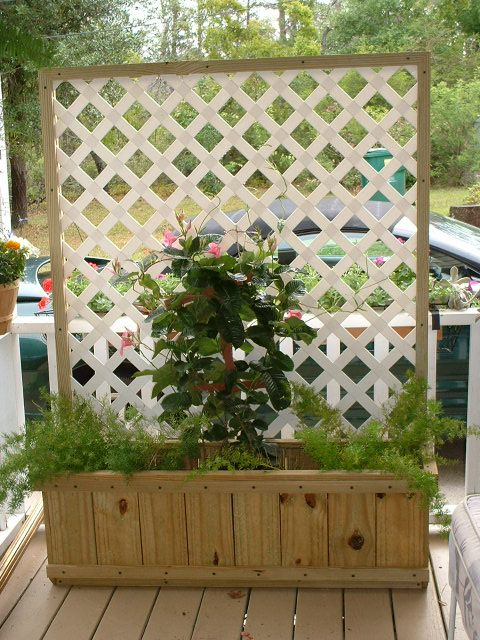 verandah lattice privacy screen