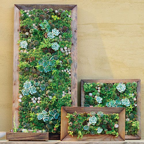 succulents on frames