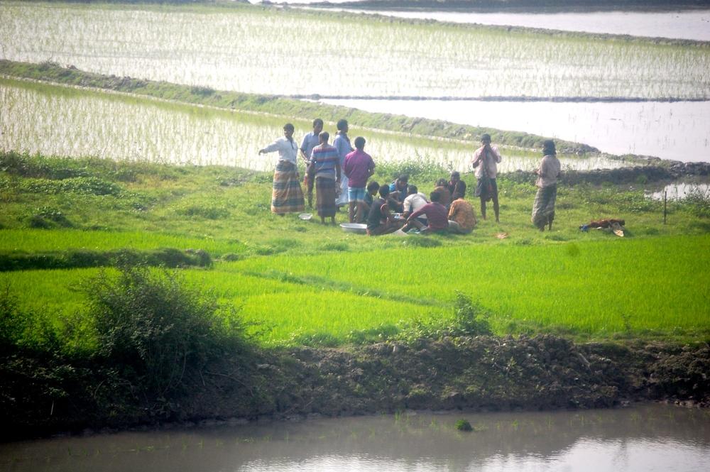 Men working in fields