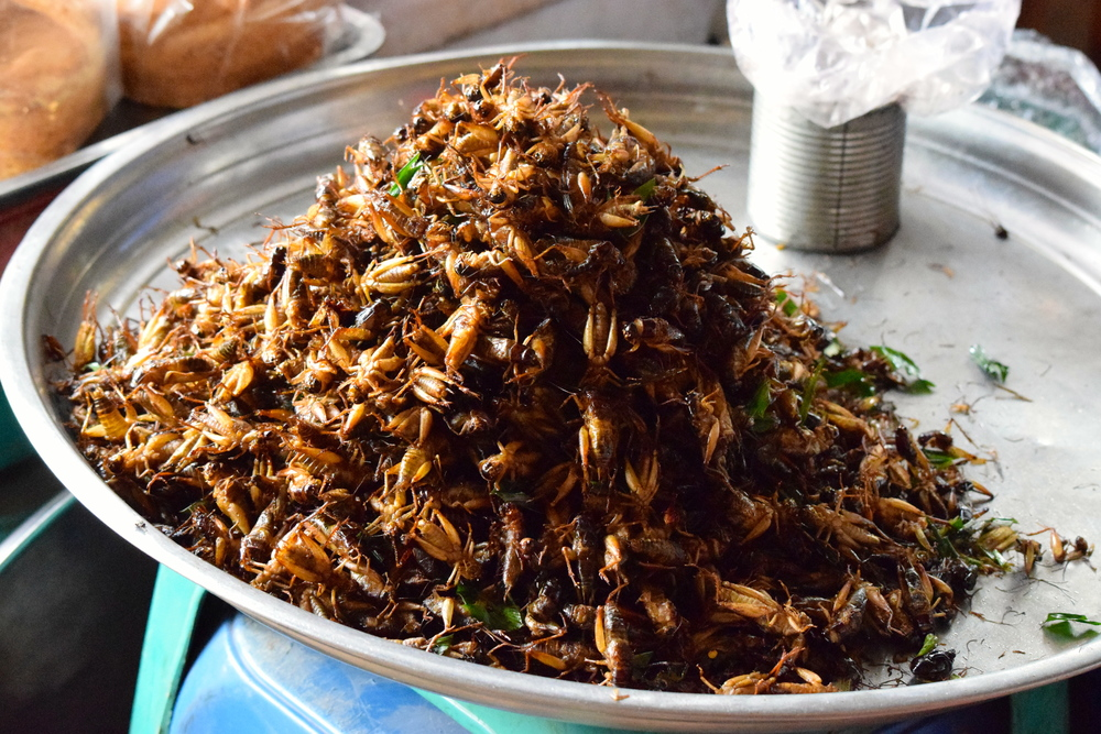 Yum! Crickets!