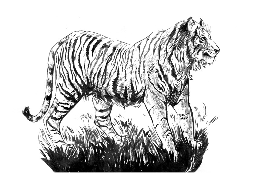 Tiger_SquareSpace.png