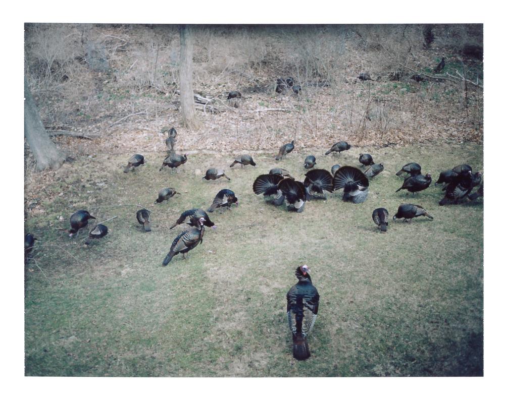 Backyard Turkey Convention