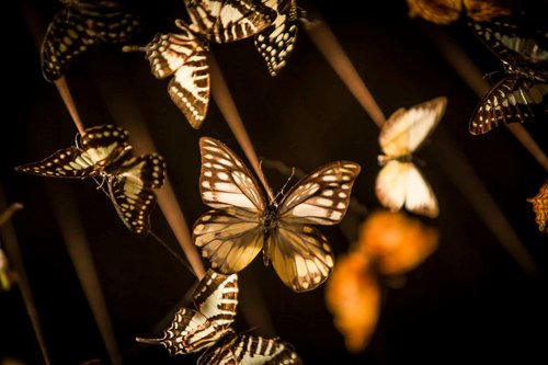 viventium-design-zac-kraemer-iron-fairies-retail-design-5.jpg