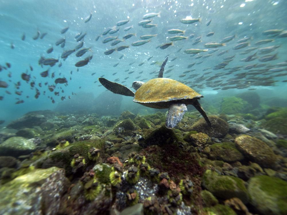 galapagos island tortoise.JPG