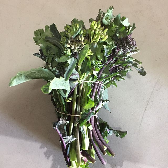 Brassica crowns, an April treat. Overwintered tips of turnips, brussels, kale, etc.  #seasonsharvest #greatingredients #localfood #yycchefs #yycfood