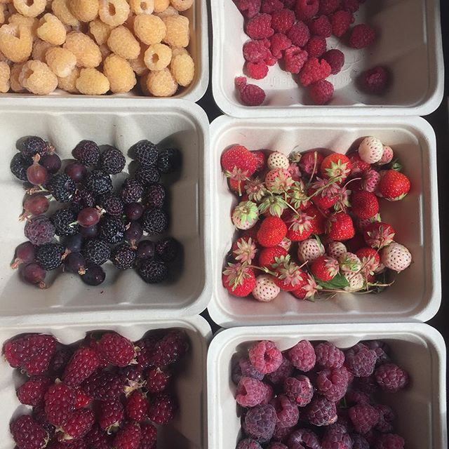 Morning picking from my garden #picky #summerberries #seasonsharvest