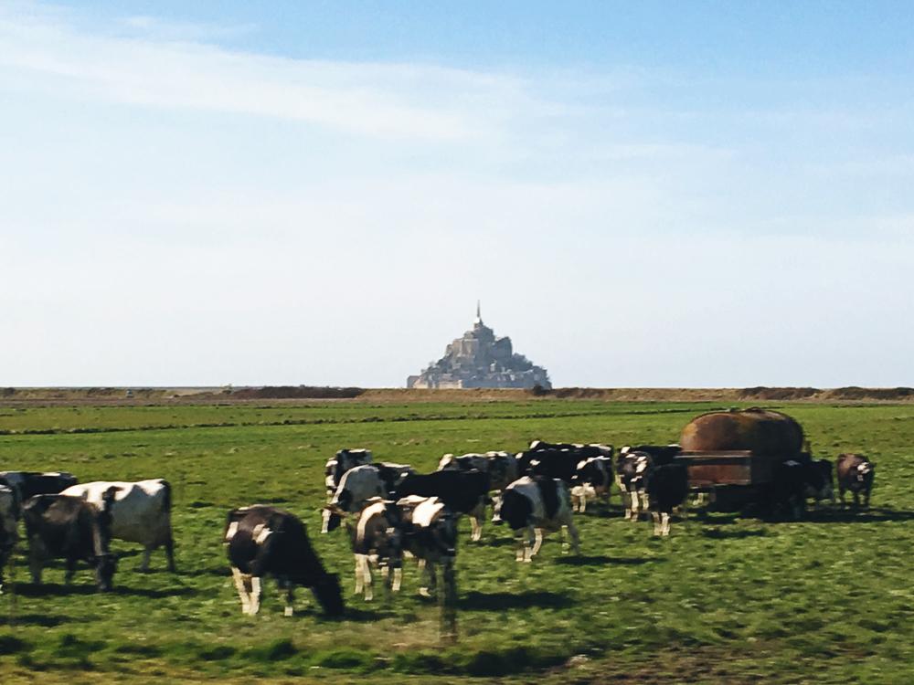 1603 - Normandyweb-15.jpg