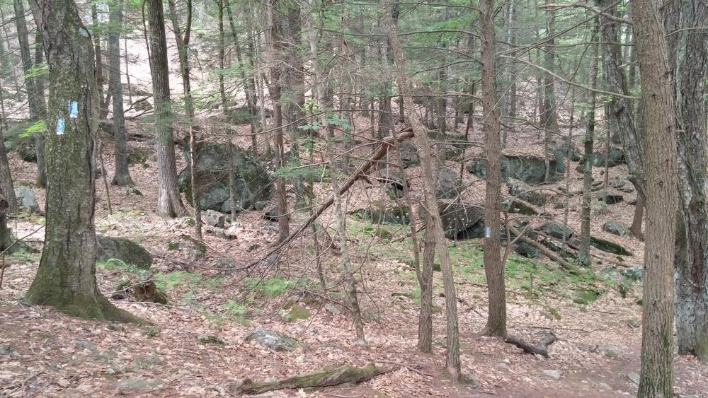 Spacious woods
