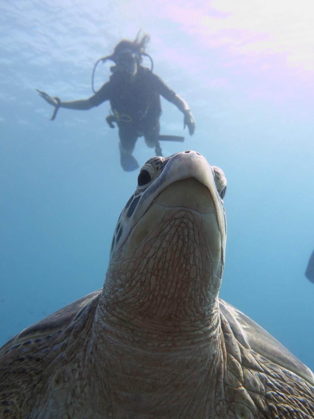 Gili Trawangan turtle