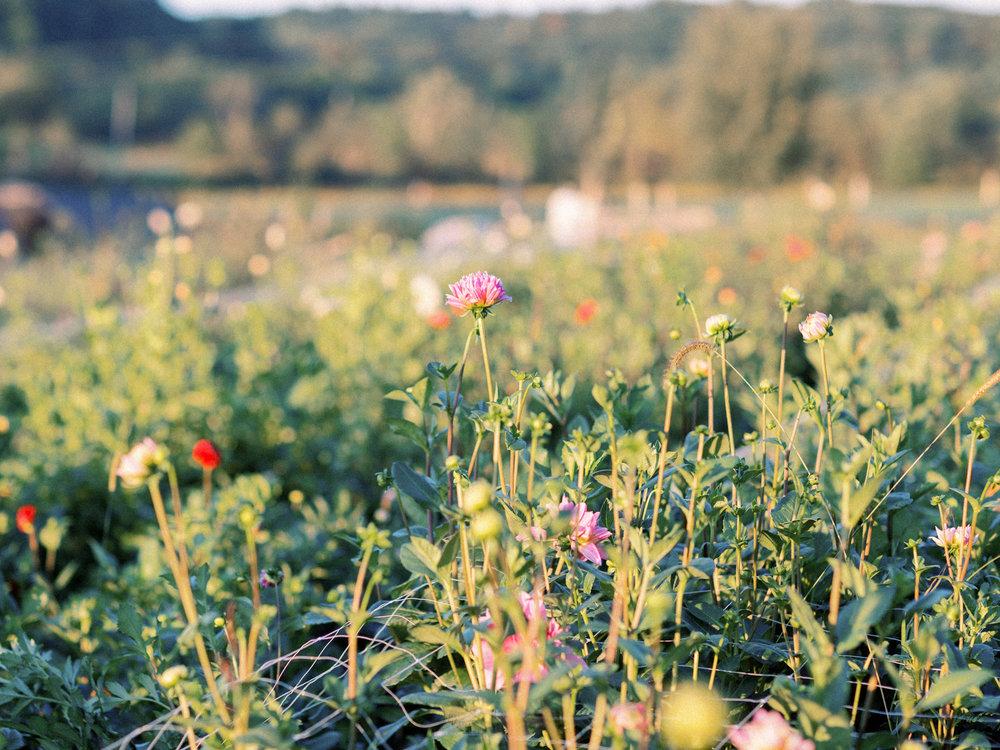 goosecreek-gardens-pittsburgh-florist-pittsburgh-family-photographer-anna-laero-photography-wedding-flowers-pittsburgh-pa-11.jpg