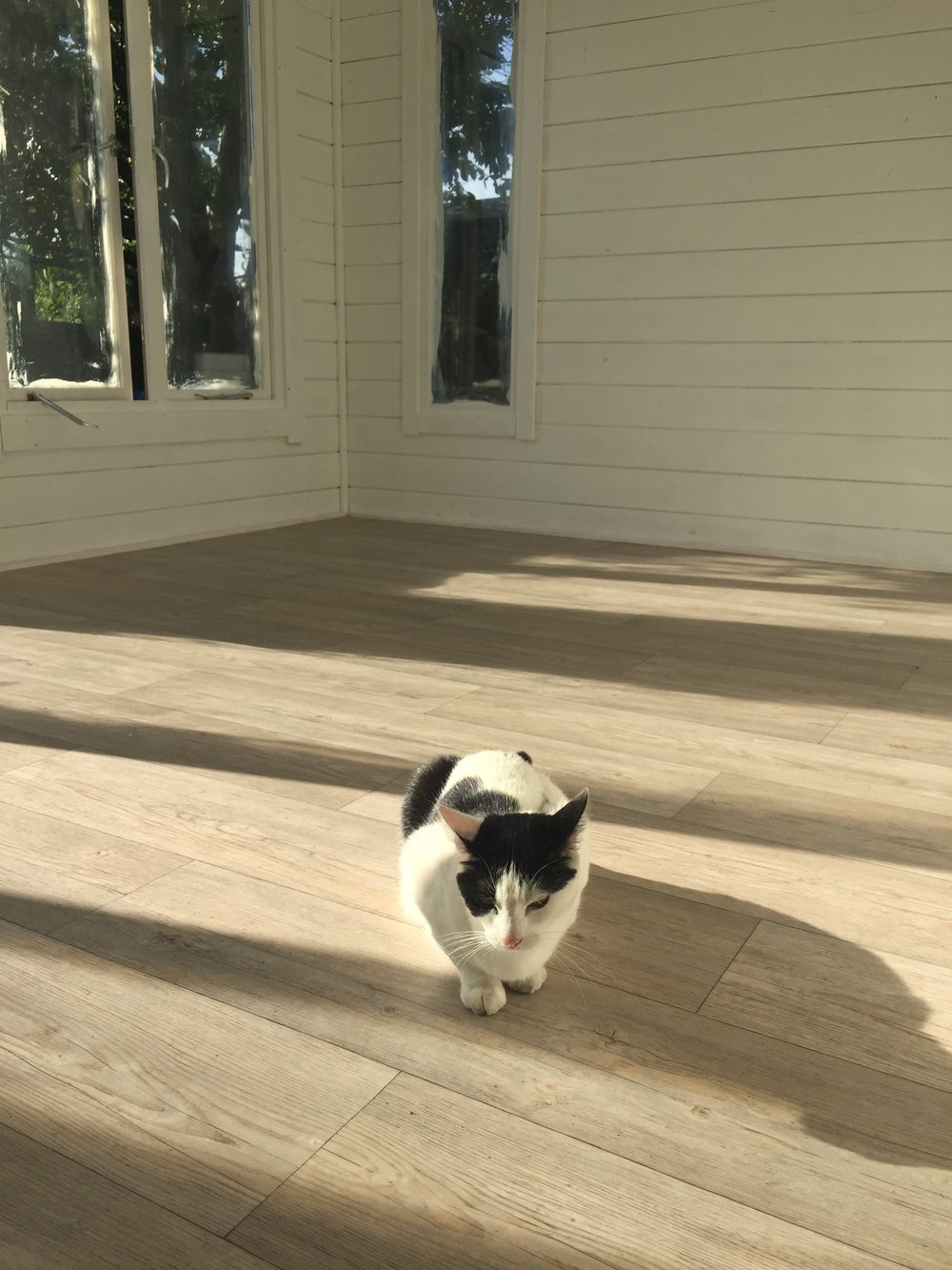 Flora approval. I chose a vinyl floor - hardy and easy to clean . Modern vinyl is fantastic and you can get very realistic wood imitation. This flooring came from Radstock Carpets.
