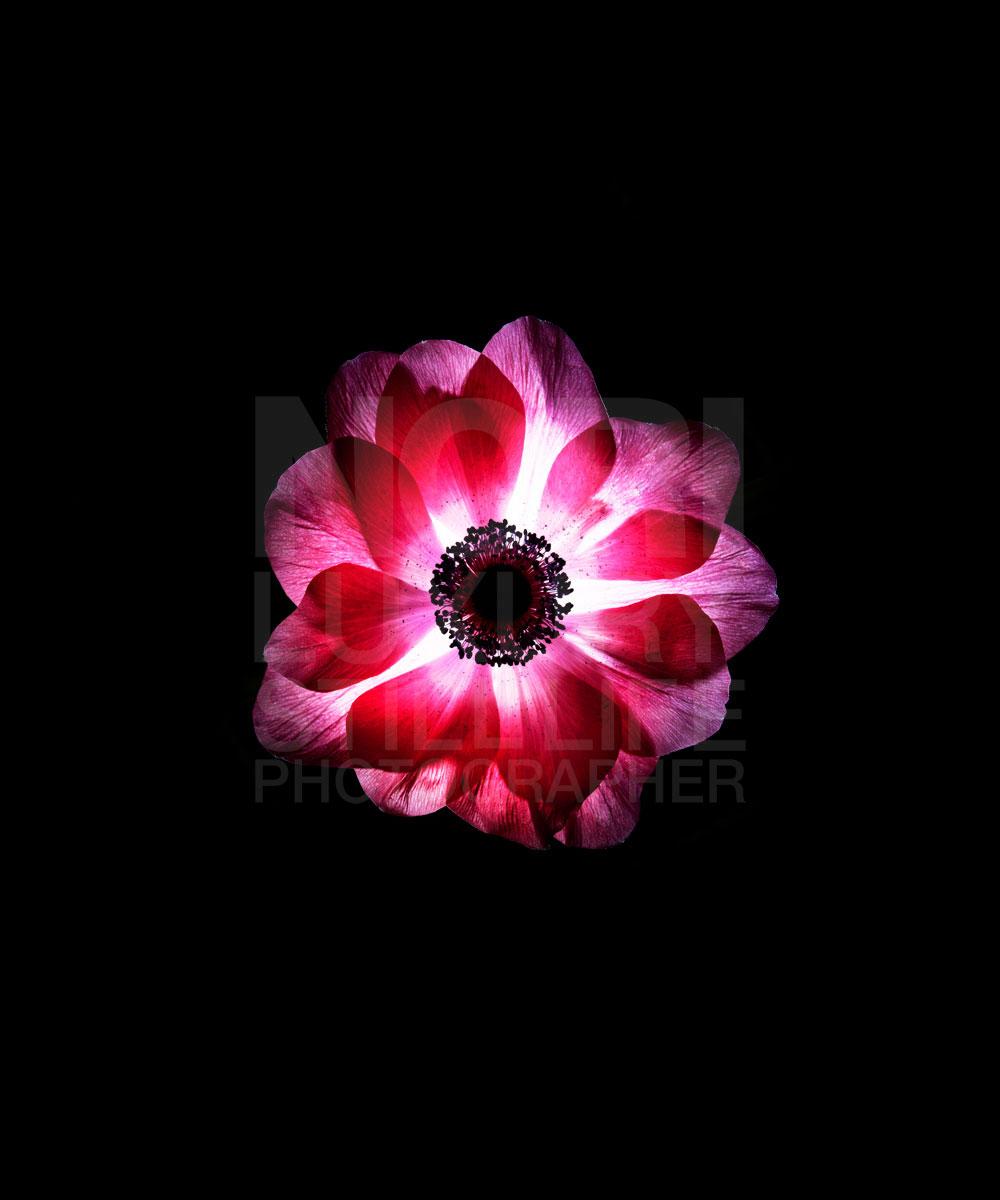 090125_Flower-090882.jpg