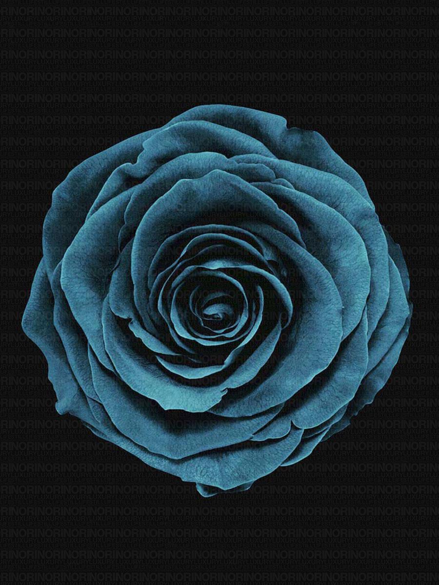 Untitled-5_pink_blue.jpg