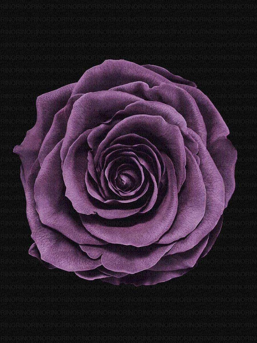 Rose_0918re_layer.jpg