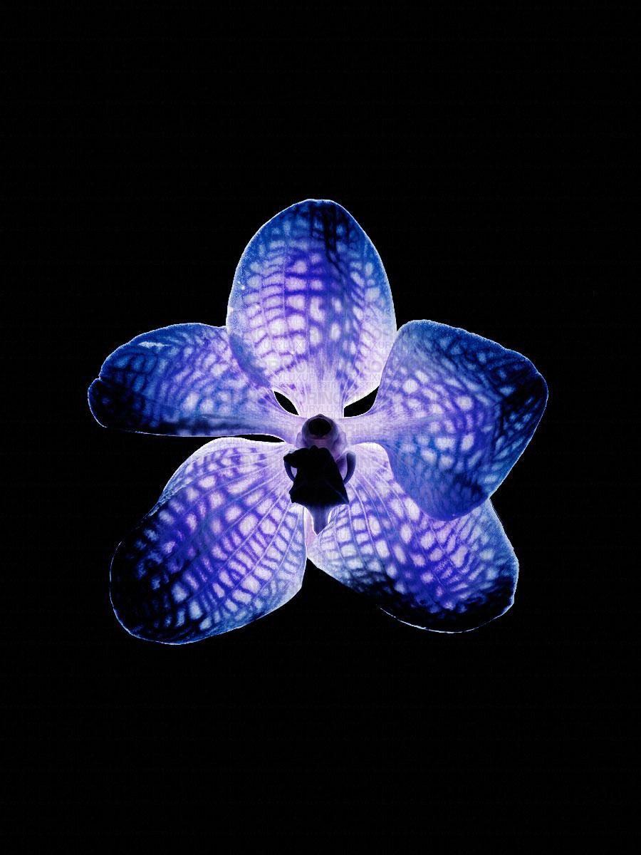 090125_Flower-090894.jpg