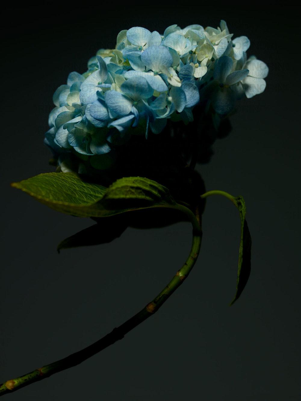 061916_flower125472_wm.jpg