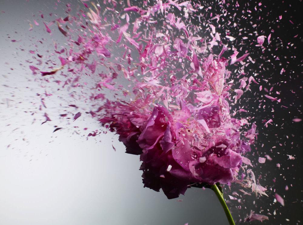nori_inoguchi_Pink-Flower_Liquid_nitrogen_explosion.jpg